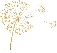 logo le monde de rose